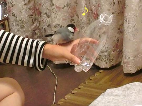 打たせ水♪