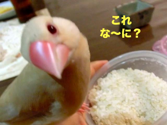 これ、な〜に?