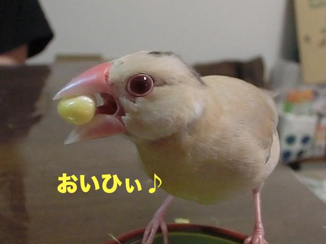 おいひ♪ぃ
