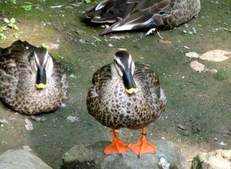 旭山動物園鳥5