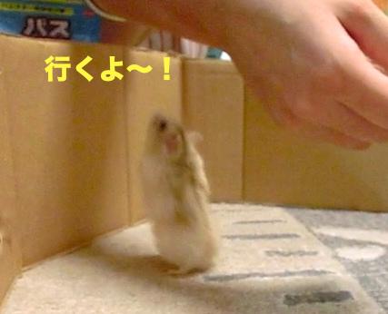 行くよ〜!