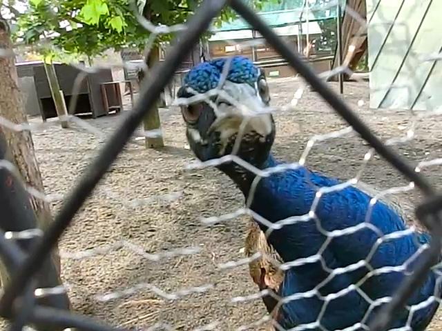 旭山動物園鳥2