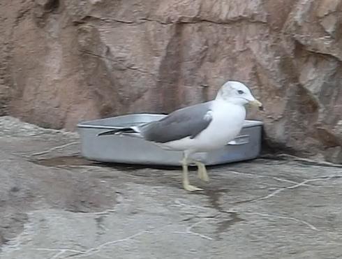 旭山動物園鳥4