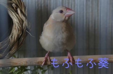 葵くんのおもちゃ1