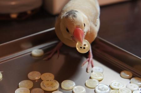 葵くんのおもちゃ2