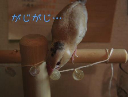 葵くんのおもちゃ3