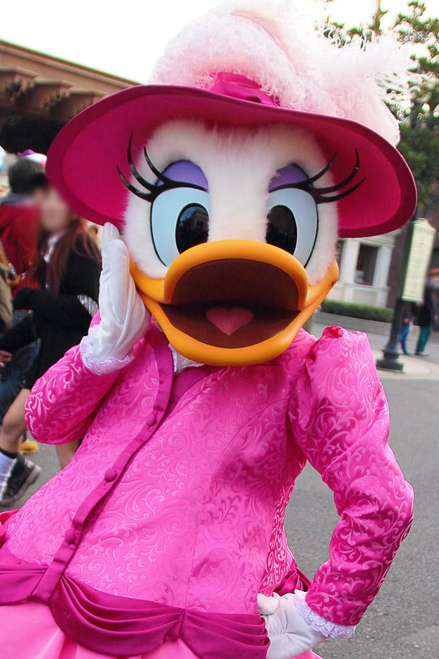 ピンクのお嬢1