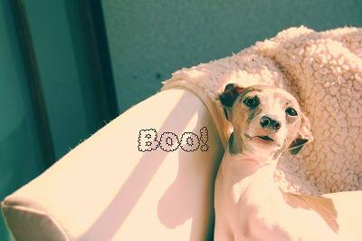 BOO!.jpg