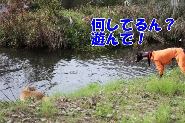 2013/11/03 その4