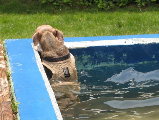リューク、プールから上がろうと頑張ってみる。