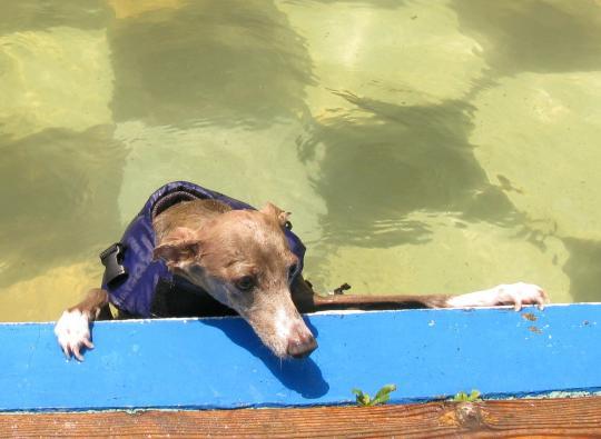 リューク、泳ぎ着く。