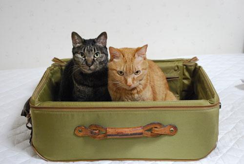 トランクと猫たち