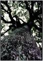 優秀賞①(長澤)「大樹の里」
