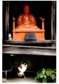 優秀賞③(長澤)「仏のしもべ」