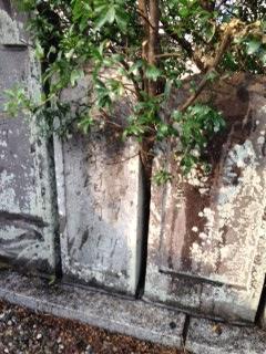 明和年間の墓石2