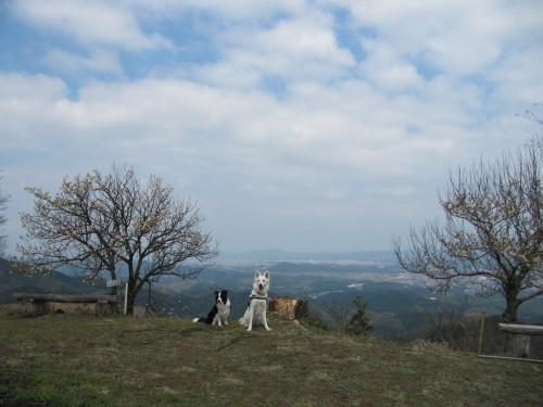 頂上から中海を望む ホワイトスイスシェパード ビオラ と ボーダーコリー メル