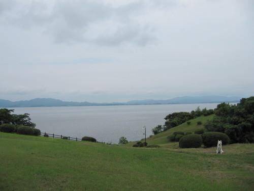 宍道湖を背景に ホワイトスイスシェパード ビオラ