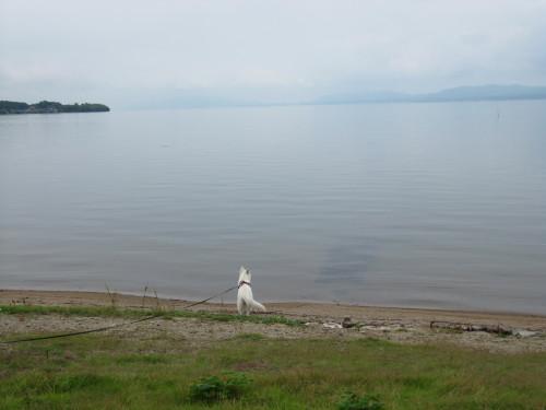 宍道湖とホワイトスイスシェパード ビオラ③