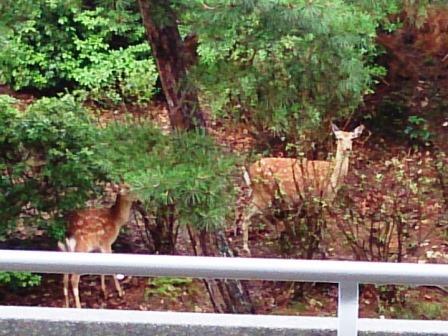 国際会議場 鹿