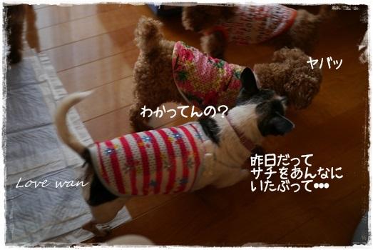 P1170042.jpg