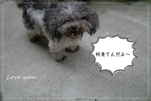 miniP1180578.jpg