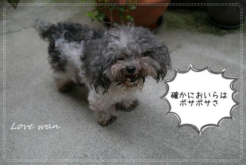 miniP1180579.jpg