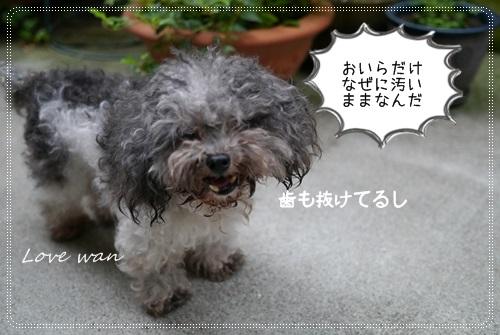 miniP1180580.jpg