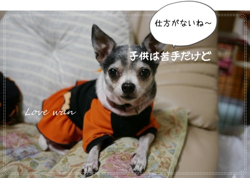 miniP1200118.jpg