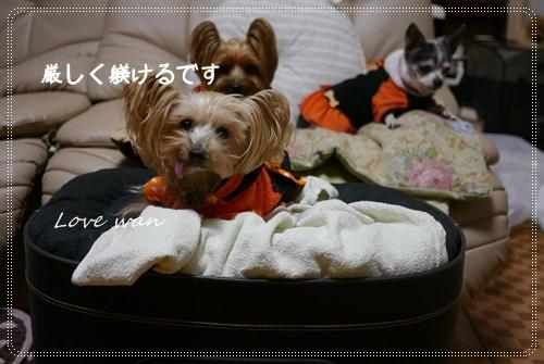 miniP1200119.jpg