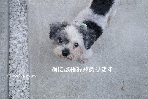 ren5P1170959.jpg