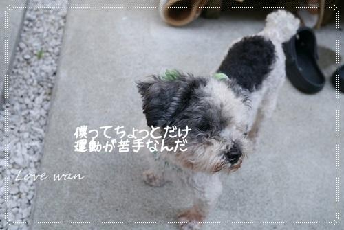 ren5P1170960.jpg