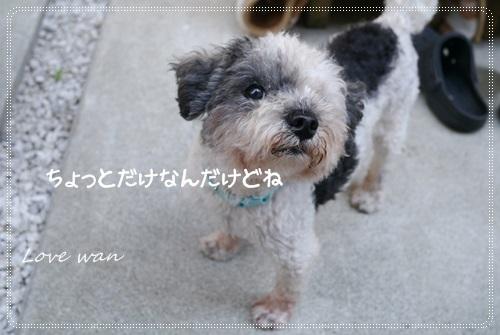 ren5P1170961.jpg
