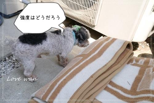 ren5P1170980.jpg