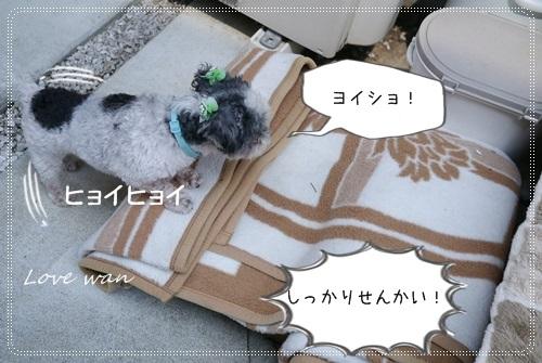 ren5P1170984.jpg