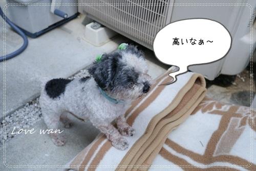 ren5P1170985.jpg