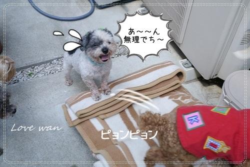 ren5P1170991.jpg