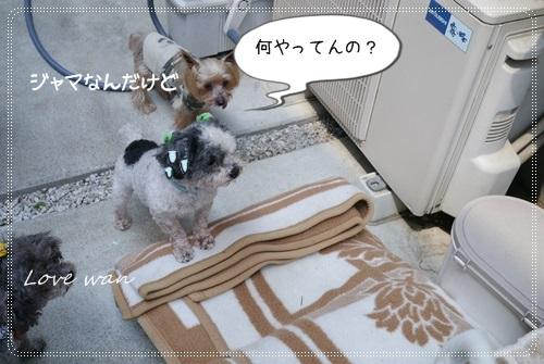 ren5P1170992.jpg
