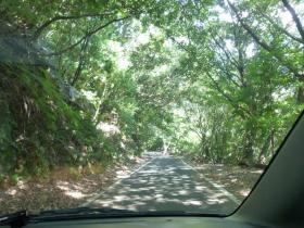 林道ドライブ