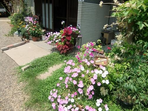 2013.8.11 熱い夏(庭) 008 (2)