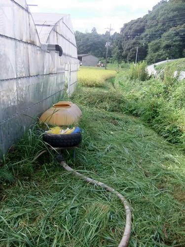 2013.8.25 ハウス回り草刈 005 (4)