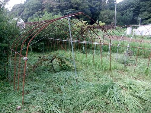 2013.8.25 ハウス回り草刈 005 (2)