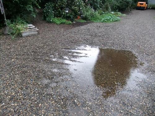 2013.9.4 久々の雨(庭) 024 (1)
