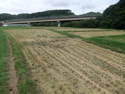 2013.9.9 稲刈り藁の再利用(ママさんの畑) 021 (1)