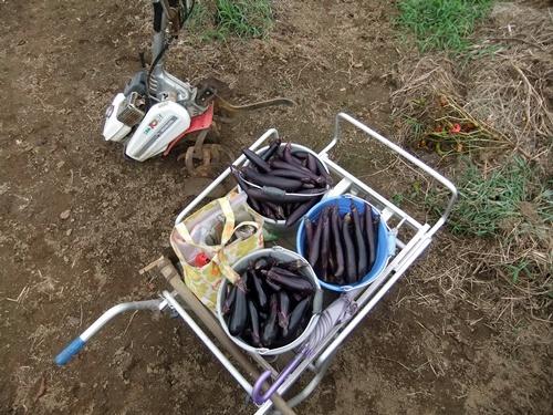2013.9.9 稲刈り藁の再利用(ママさんの畑) 021 (4)