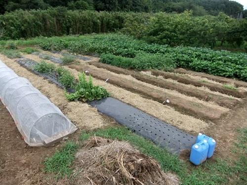 2013.9.9 稲刈り藁の再利用(ママさんの畑) 021 (3)