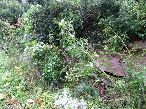 2013.9.16 台風18号被害(自宅) 004
