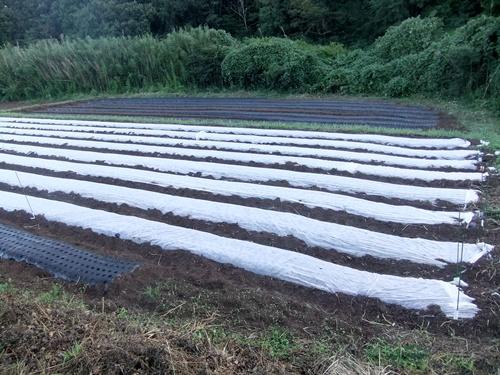 2013.9.16 台風18号通過あとの晴天(畑) 011