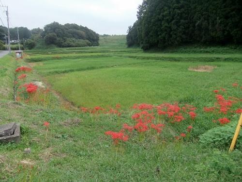 2013.9.24 鎌足里山観察会下見(鎌足) 019