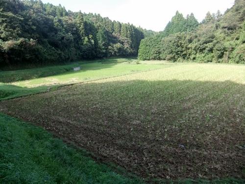 2013.9.24 鎌足里山観察会下見(鎌足) 032