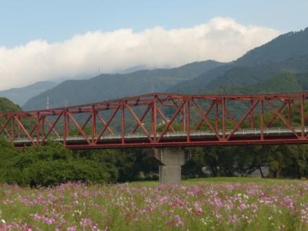 大洲・五郎河原 コスモス 1
